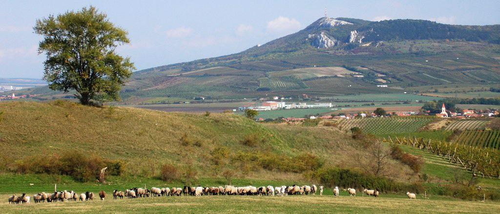 Jáňův dvůr farma