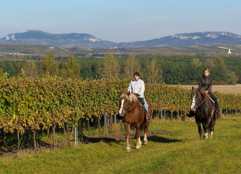 Jáňův dvůr Za vínem na koni